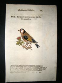 Aldrovandi 1642 Antique Hand Col Bird Print. Carduelis Finch